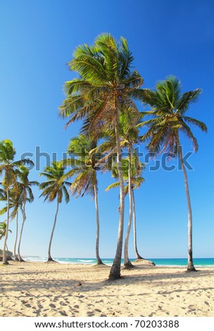 Palms on beautiful beach