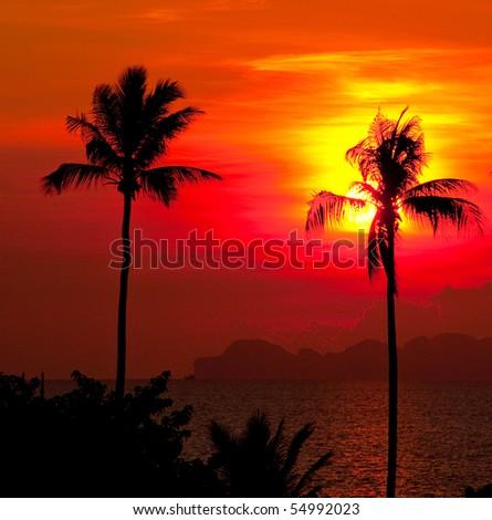 Palms on Sunset - stock photo