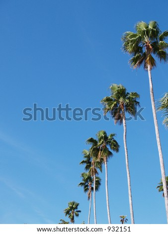 Palms on the right