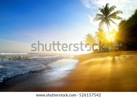 Palms on the sandy beach near ocean at sunrise