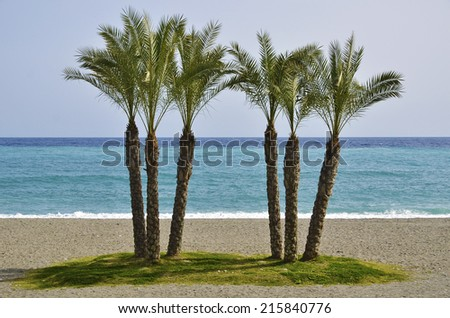 Palms on the tropical coast of Granada