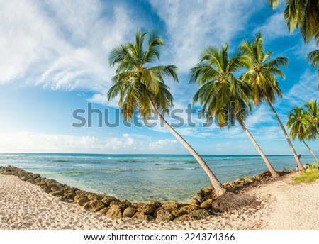 Palms on the white beach and a turquoise sea on a Caribbean island of Barbados. Panorama - stock photo