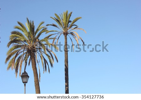 Palms tree and lantern