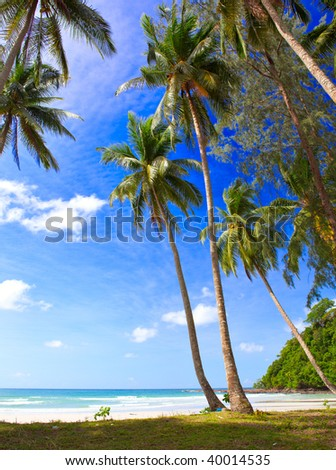 Palms tree near sea water - tropical nature, place for child, pacific family holyday - stock photo
