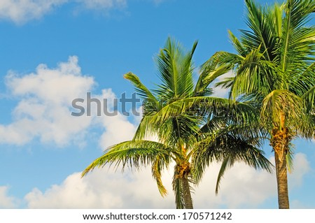 Palms trees on the beach during bright day