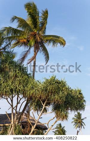 palms tropical  - stock photo