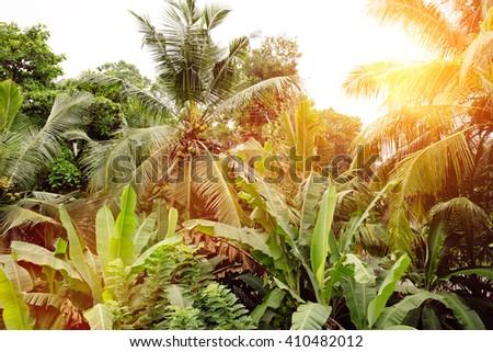 Palms tropical. Sri Lanka. - stock photo