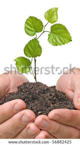 Palms with a tree seedling - stock photo