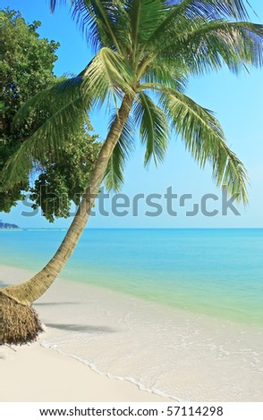 Palmtree on the tropical beach. - stock photo