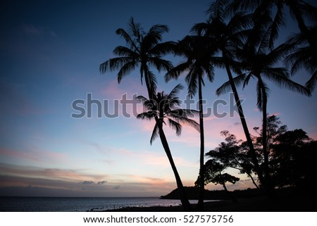 Palmtree  silhouettes on the beach about ten minutes after sunset on Molokai island, Hawaii