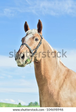 palomino horse in the spring field