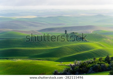 Palouse rolling hills in sunrise. The view from top of Steptoe Butte State Park.