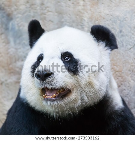 Panda was sitting happily smiling in the morning. - stock photo
