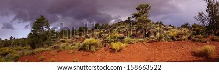 Panorama, Backlit desert landscape, junipers, snags and scrub brush, Torrey,Utah  - stock photo