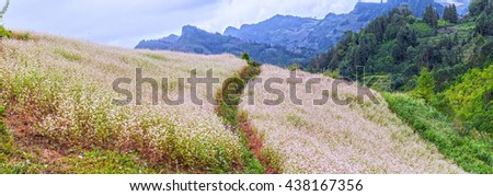 Panorama buckwheat flower field on hills with trails crossing accent, far away majestic mountain range and beautiful flying dragonfly paradise in Northwest Vietnam