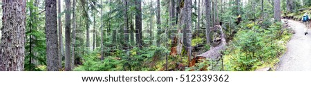 Panorama, conifer forest in Joffre Lakes Provincial Park, British Columbia, Canada