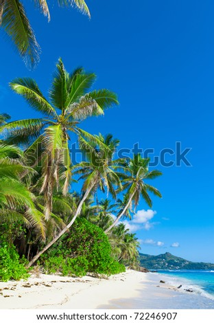 Panorama Dream Jungle - stock photo