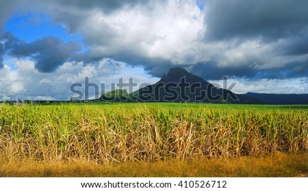 Panorama high mountains with storm clouds and with green sugar cane field foreground. Mauritius Island.  - stock photo