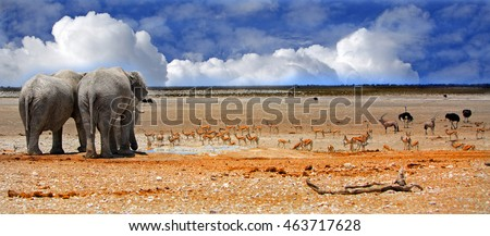 panorama image of 2 elephants looking out to the Etosha Plains with a vibrant blue cloudy sky with springbok in the background