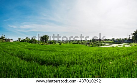 Panorama landscape, green rice field with blue sky in the morning