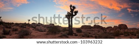 Panorama landscape of Joshua Tree National Park at sunset, USA. - stock photo