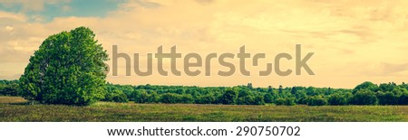 Panorama landscape with a lonely tree on a field