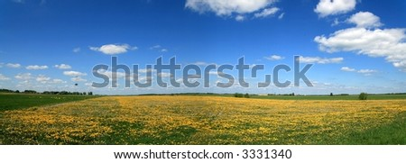 Panorama Lithuanian rural areas with blue sky and dandelion field
