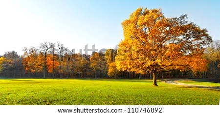 Panorama. Lonely beautiful autumn tree. Autumn Landscape. - stock photo