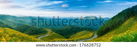 panorama mountain forest and flower field.On the mountain road through fields of flowers. As a source of tourism in Thailand - stock photo