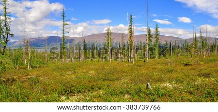 Panorama mountain tundra on the Putorana plateau. Summer landscape with larch forest-tundra in Siberia. - stock photo