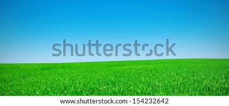 Panorama of a meadow with a green grass and the blue sky - stock photo