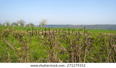 Panorama of a sunny green meadow on a hill - stock photo
