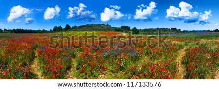 Panorama of a wild red, blue and yellow flower field near Gruissan (Narbonne), France - stock photo