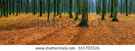 Panorama of autumn forest - stock photo