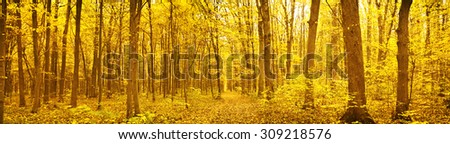 Panorama of  forest at autumn day  - stock photo