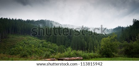 Panorama of forest in a rainy day - stock photo