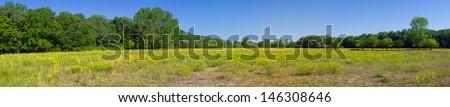 Panorama of Letea Forest in Danube Delta, Romania, in spring. - stock photo