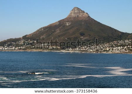 Panorama of Lions Head, Cape Town, South Africa above Camps Bay, Clifton Beach and Bantry Bay. - stock photo