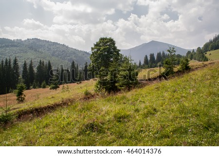 panorama of mountains Carpathians, Ukraine with trees and sky with clouds summer day