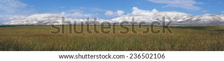 Panorama of soy field, Turkey                                - stock photo