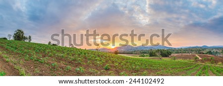 panorama of sunrise over cassava field and mountain - stock photo