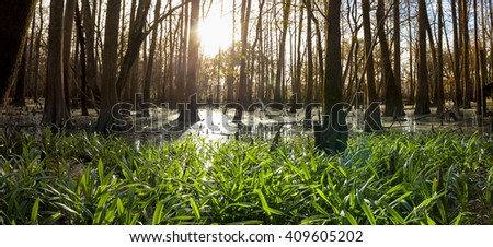 panorama of Suwanee river and cypress swamp at dawn - stock photo