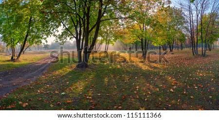 Panorama of the maple wood with road strewn with yellow leaves, autumn landscape - stock photo