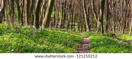 Panorama of the spring forest. The path between the fields of blooming flowers - stock photo