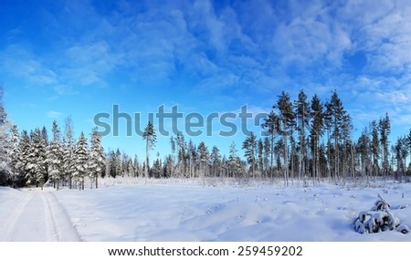 Panorama of the winter forest - stock photo
