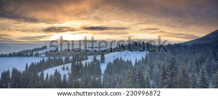Panorama of the winter forest at sunset - stock photo