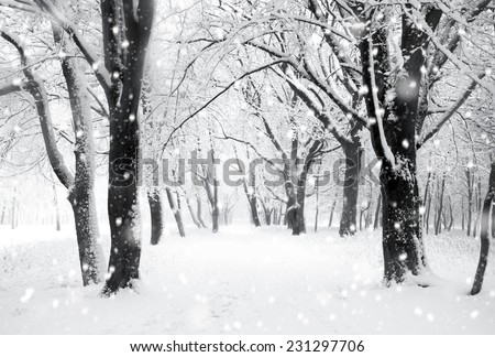 Panorama of winter forest with trees covered snow - stock photo