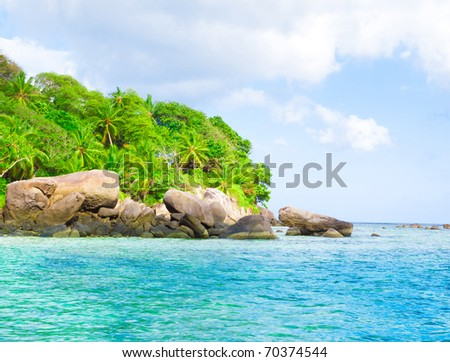 Panorama Palms Summertime - stock photo