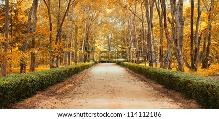 Panorama Pathway in Beautiful autumn park Landscape - stock photo