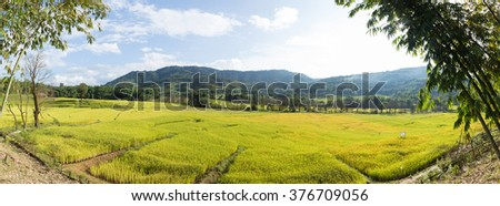 Panorama rice field and mountain. forest cover mountain. mountain in north Thailand. - stock photo
